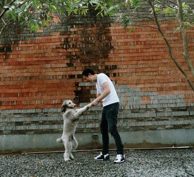 Luxuri_Pets_076