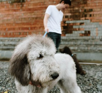 Luxuri_Pets_077