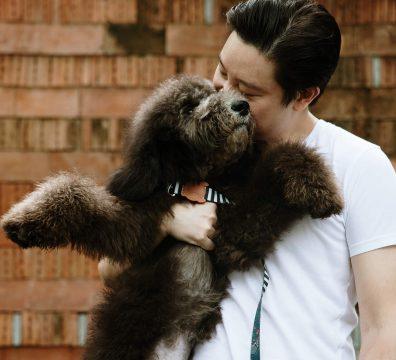 Luxuri_Pets_101