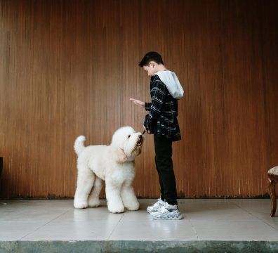 Luxuri_Pets_144