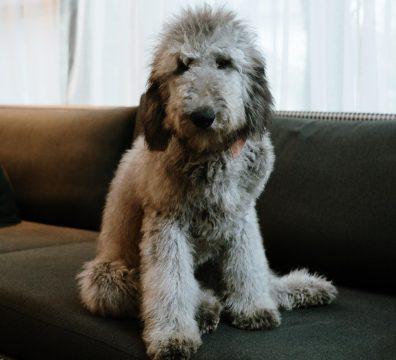 Luxuri_Pets_248