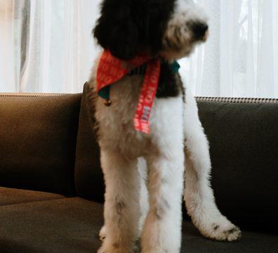 Luxuri_Pets_252