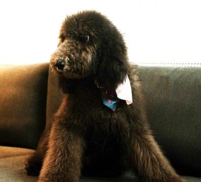 Luxuri_Pets_256
