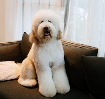Luxuri_Pets_240