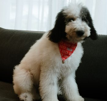 Luxuri_Pets_251